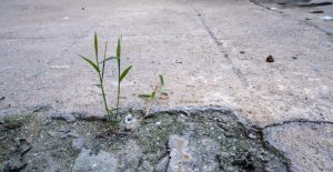 Weeds growing in broken asphalt